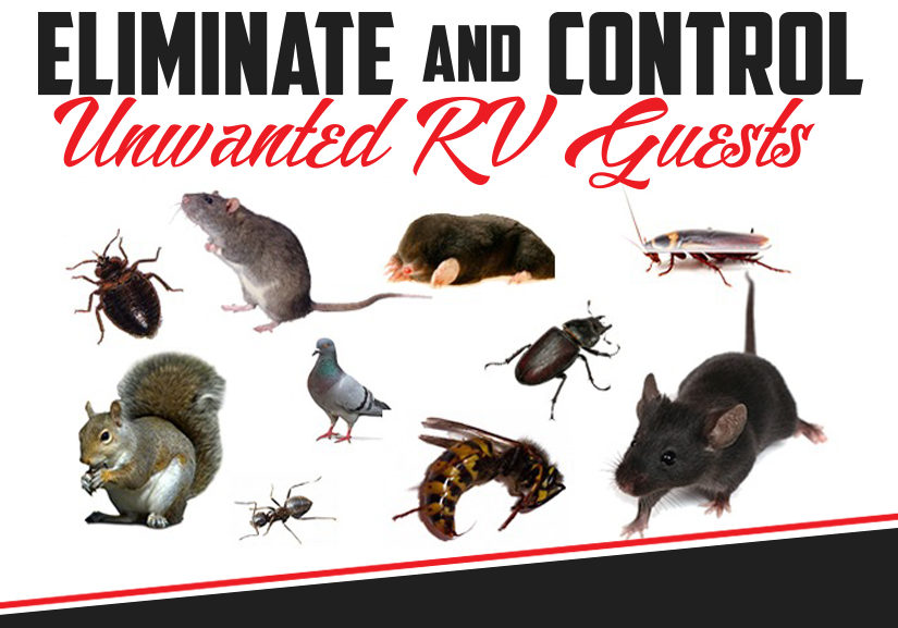 RV Pest & Rodent Control | DIY Tips & Tricks | Sylvan Lake RV